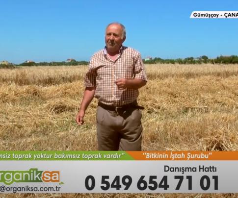Ezine Çanakkale Zeytin ve Buğday Üreticileri